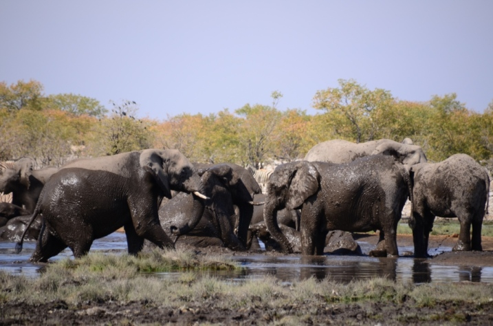 Elephant play - Rietfontein waterhole