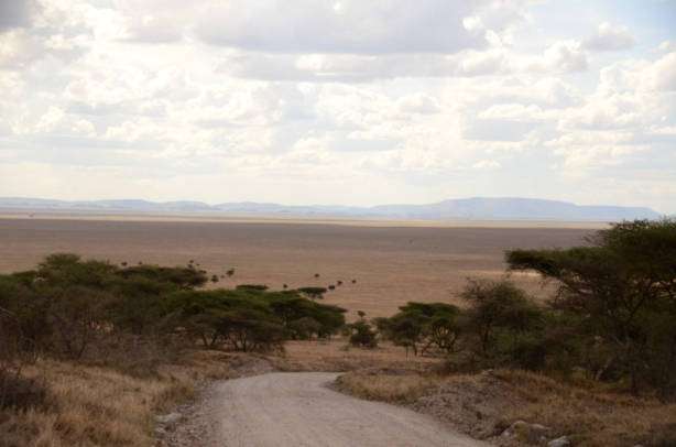 The view down onto the Serengeti